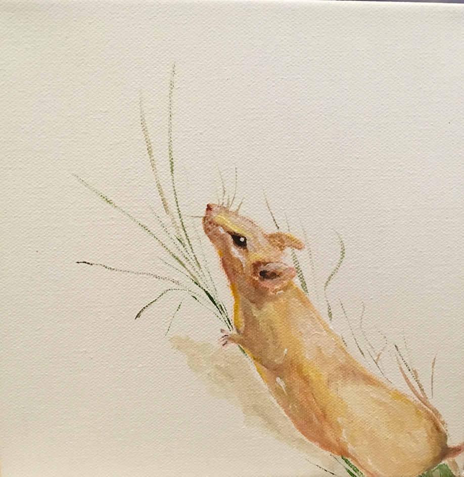 Grass Mouse