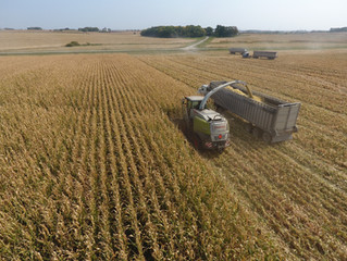 2020 Harvest