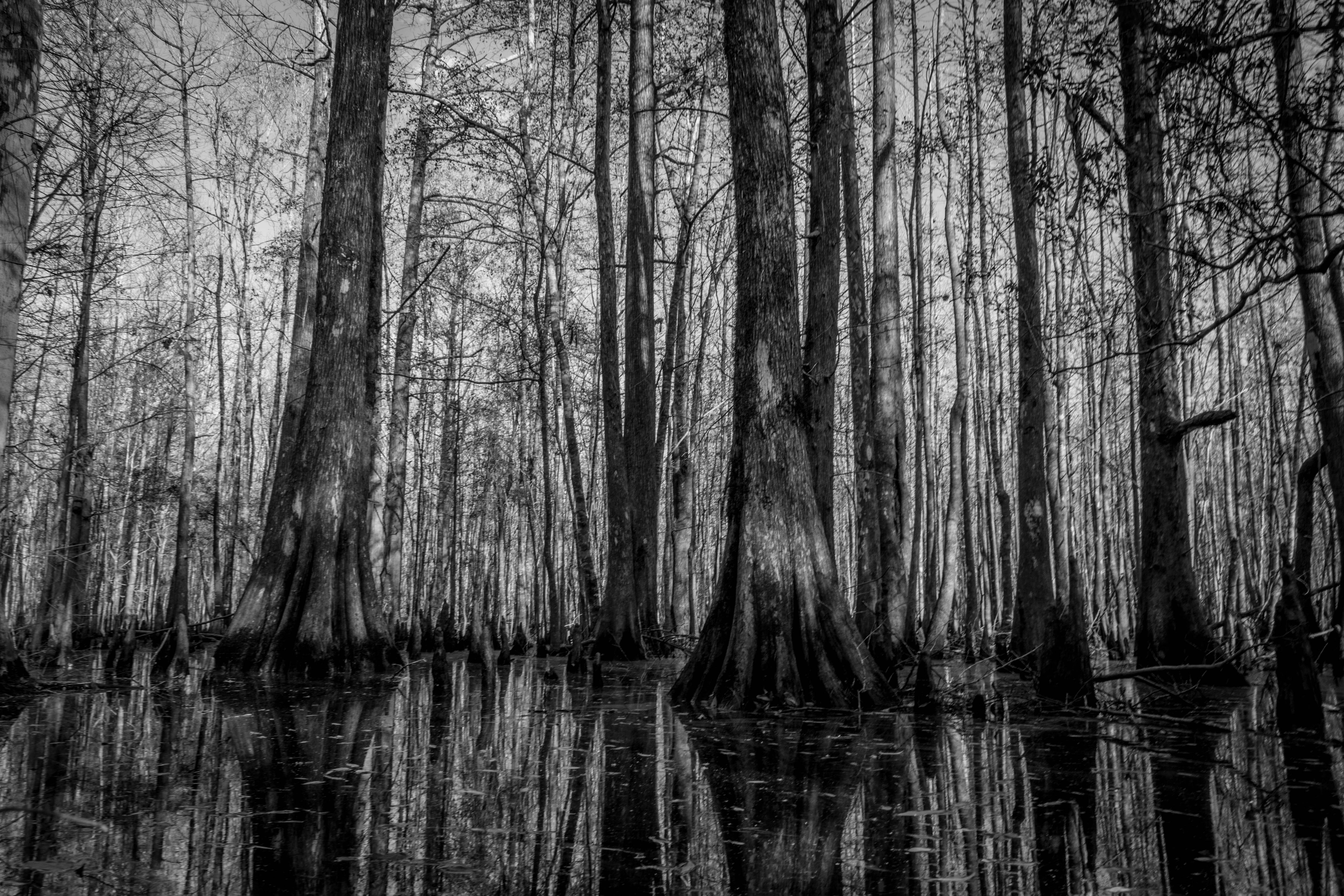 Ion Swamp
