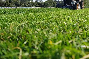 lawn mower cutting grass.jpg