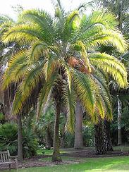 nutrients palm.jpg