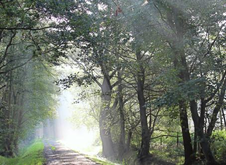Mindfulnessmeditatie voor volwassenen: Voelend Lijf