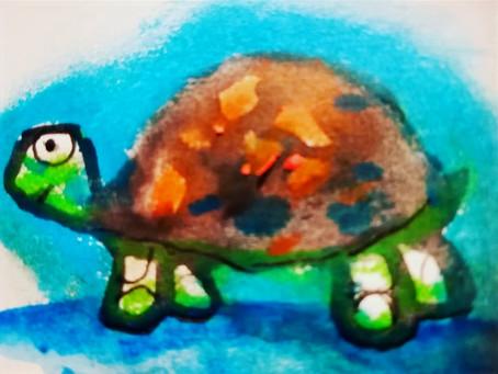 Mag ik je voorstellen: schildpad Keya