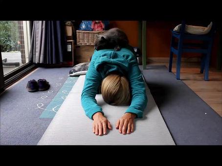 Yogakat