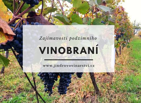 Zajímavosti o vinobraní