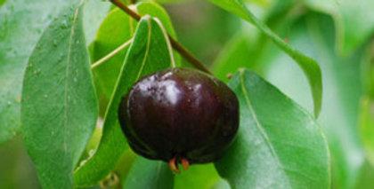 Brazilian/Surinam Cherry - BLACK