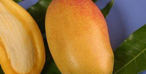 Mango | Lemon Zest