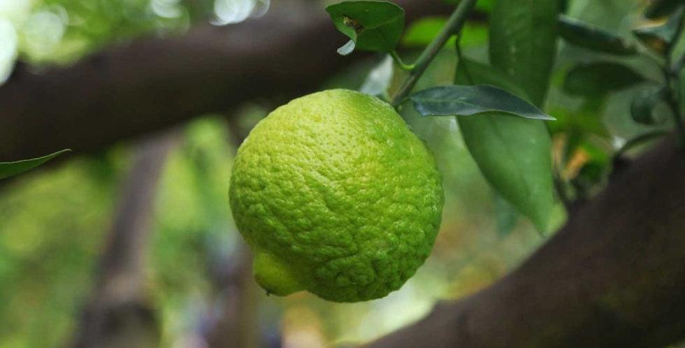 Citrus | Lime