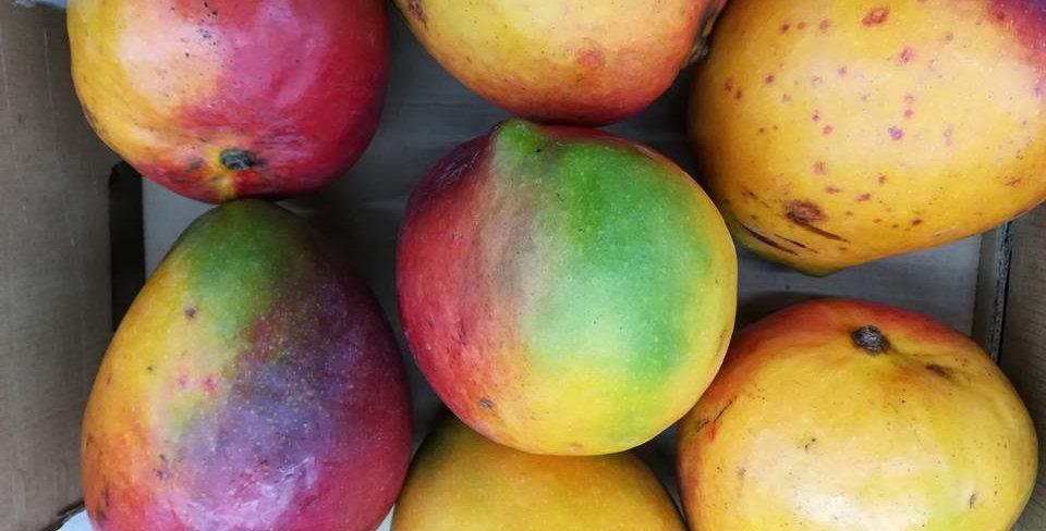Mango | Kiett