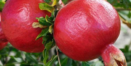 Pomegranate | Wonderful