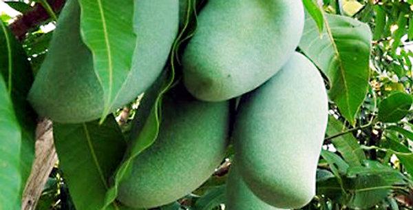 Mango | Keow Savoey