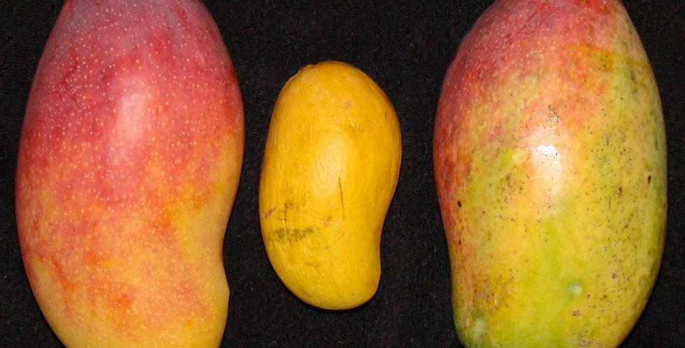 Mango | Valencia Pride