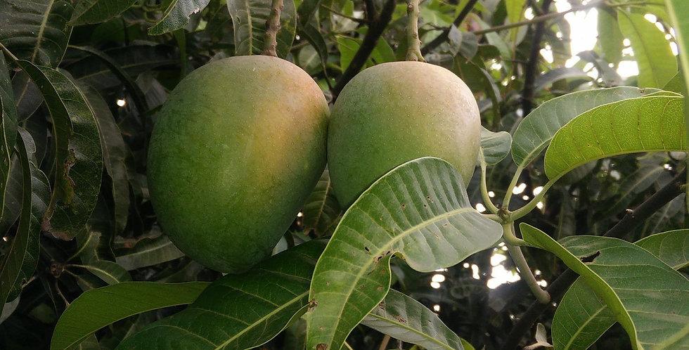 Mango   Raspuri