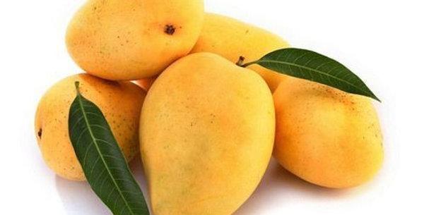 Mango | Kesar