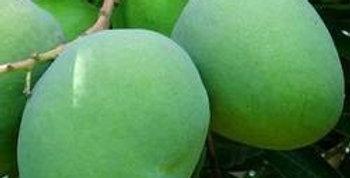 Mango | Bombay Green