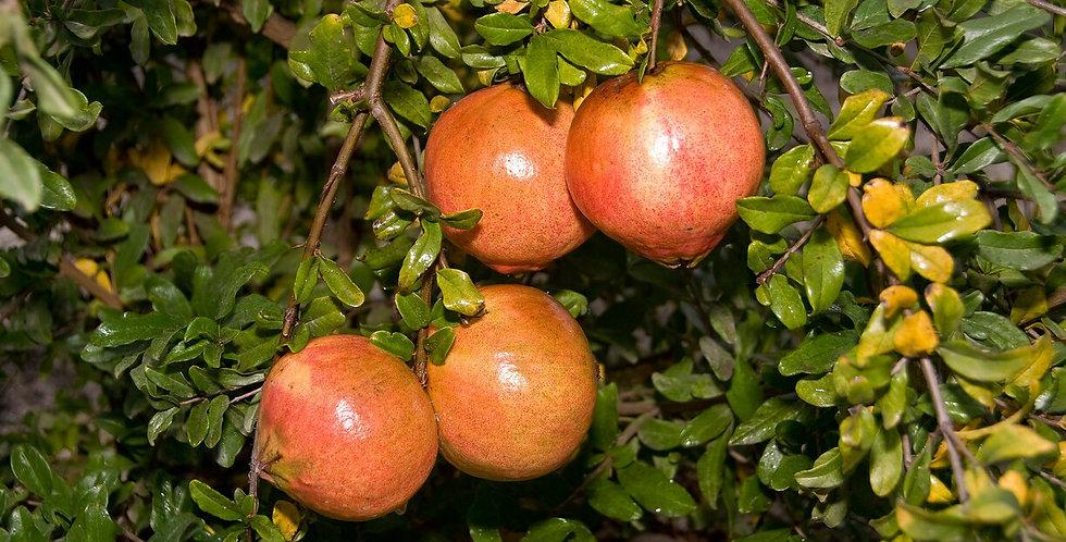 Pomegranate | Desertnyi