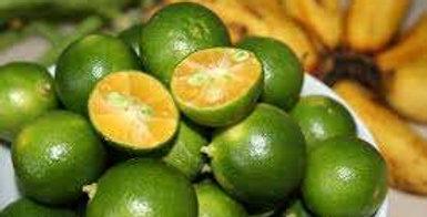 Citrus   Calamansi