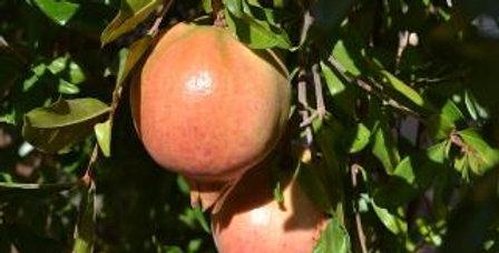 Pomegranate | Ambrosia