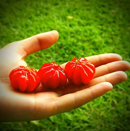 Brazilian Cherries