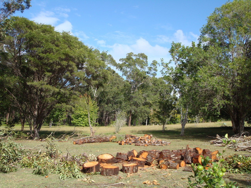 We recommend a number of ways to recycle your tree   Accomplished Tree Management