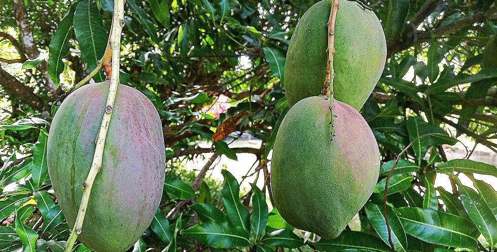 Mango | Julie