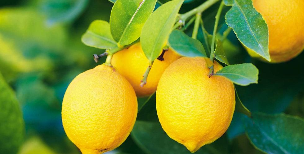 Citrus | Lemon