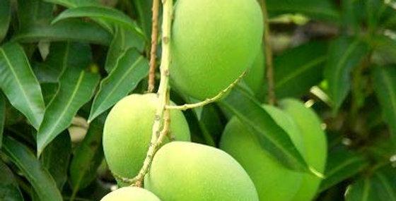 Mango | Kalapadi