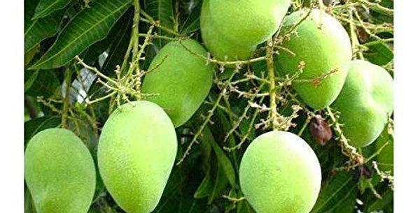 Mango | Chausa