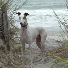 Greyhound Gallery