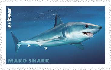 US Mako shark