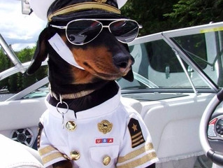 7 Things You Probably Didn't Do When You Went Boating With Your Dog.