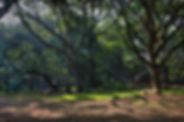 Cubbon-Park.jpg