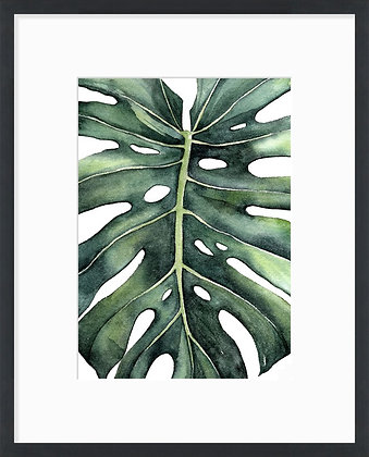 Monstera zoom