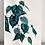 Thumbnail: Philodendron