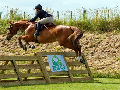 Horse jumps upgraded