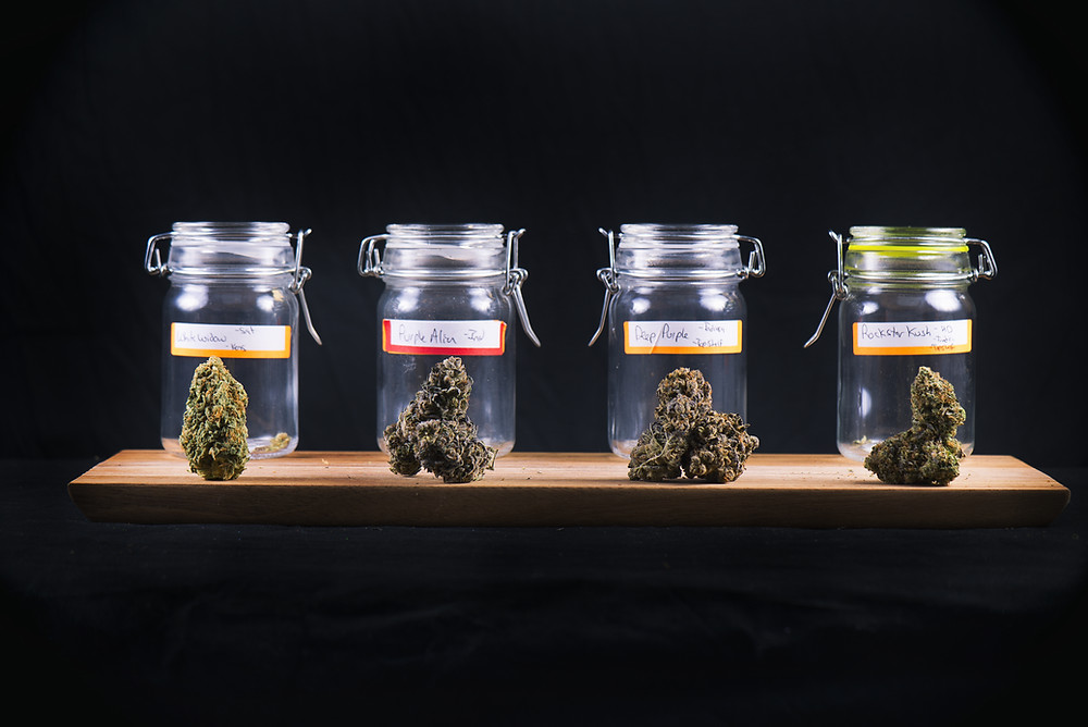4 Marijuana Jars Lined Up With One Nug of Cannabis in Front of Each