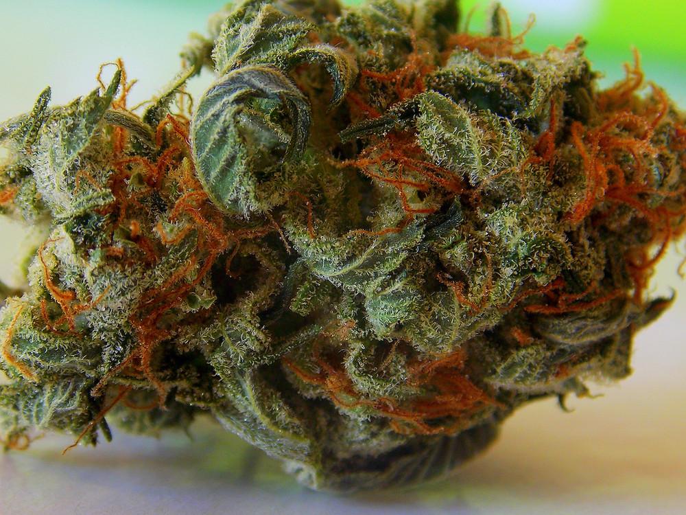 Close-Up of Marijuana Nug