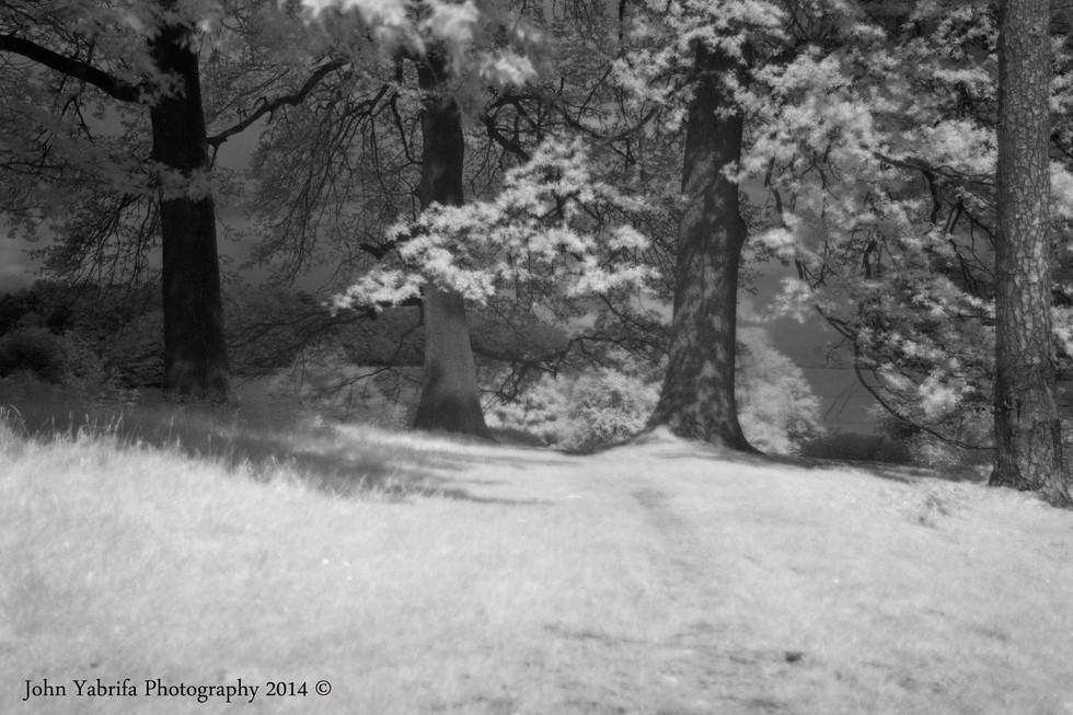 Forest gateway.jpg