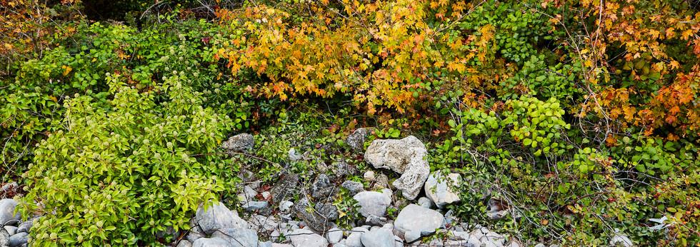 Autumn foliage 6x17.jpg