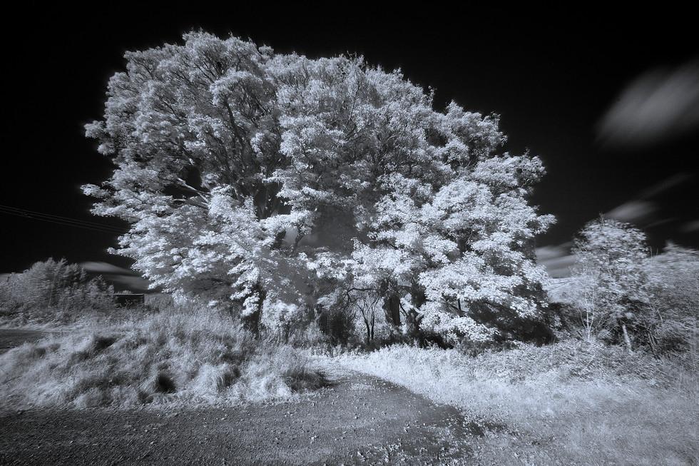 Autumn burst IR.jpg