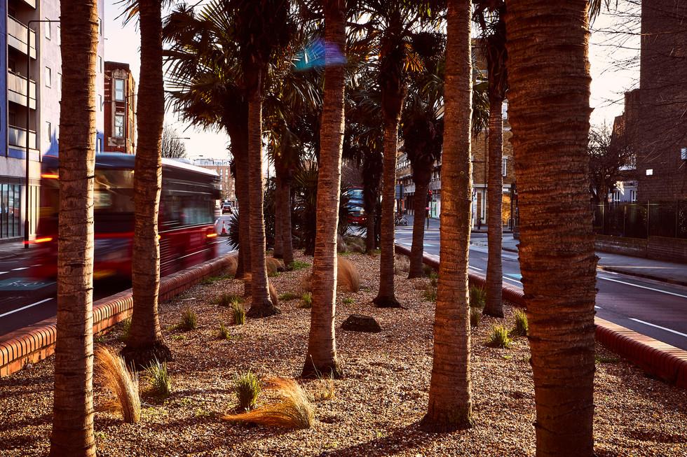 Peckham palm trees 1.jpg