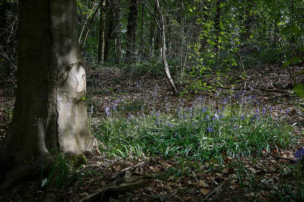 Forest floor 1.jpg