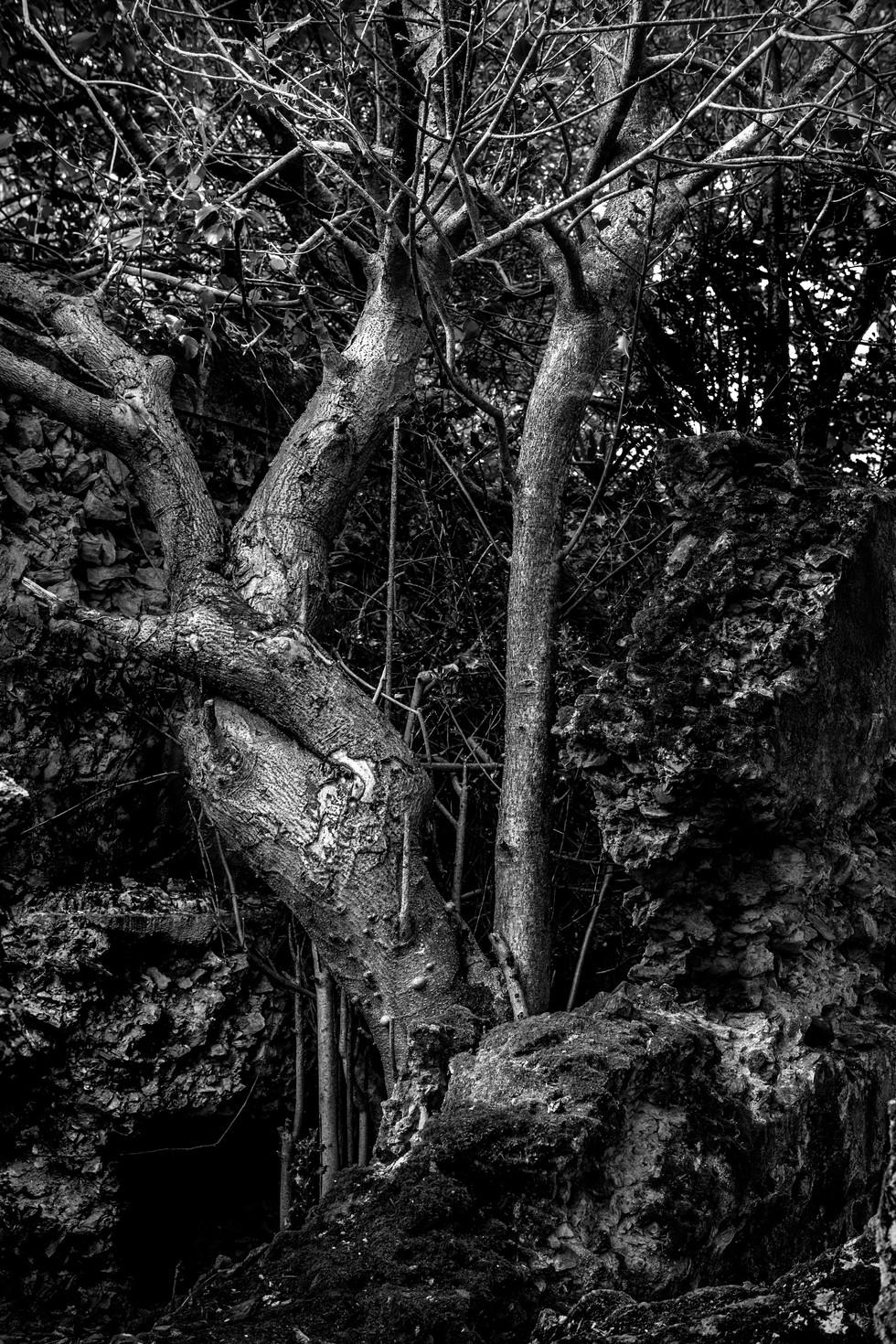 Wheal Ruins tree B7W (1 of 1) copy 2.jpg