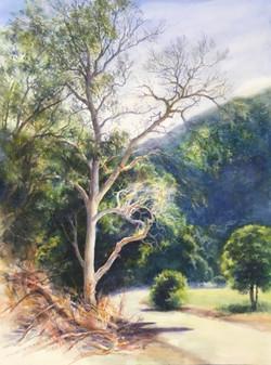 Early summer, Welch Creek Road