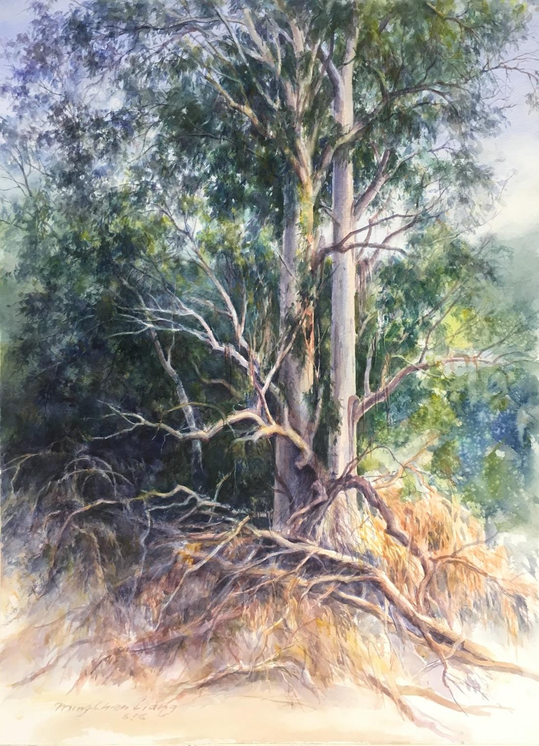 Two eucalyptus trees