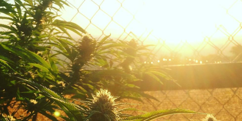Cannabis Social At the Ranch