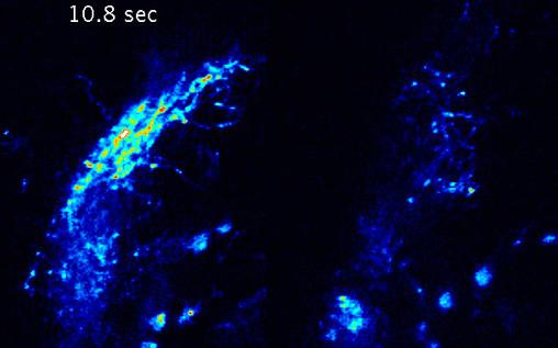 Imaging visually-evoked neuronal activity in vivo