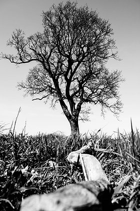 Tree of Life (2018), Alfie Bowen