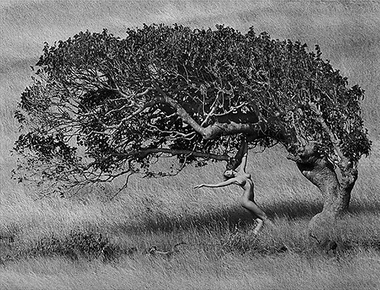 Ashley and the Tree, 1984