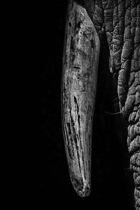 Tusker (2016), Alfie Bowen